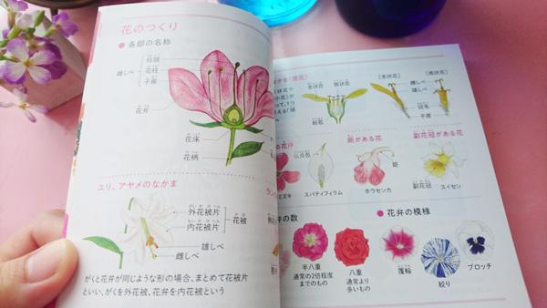 1804_hanazukan2