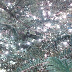 151128_tree