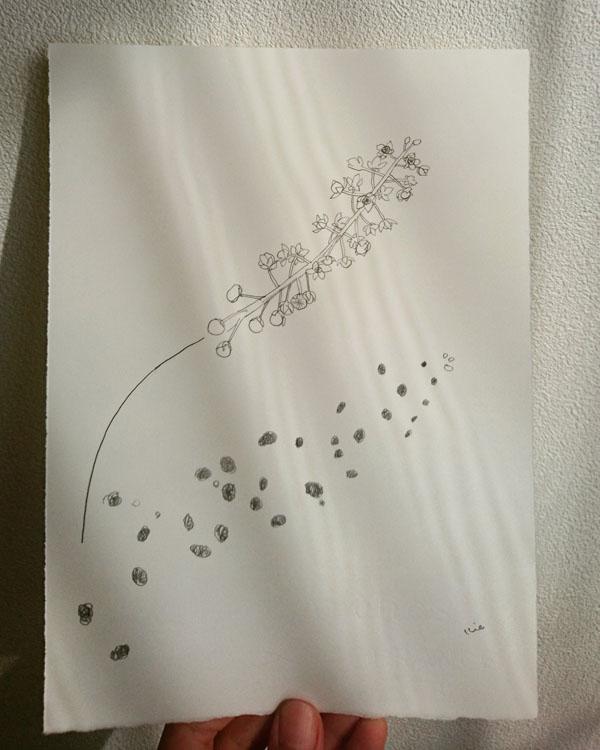 160729_flower