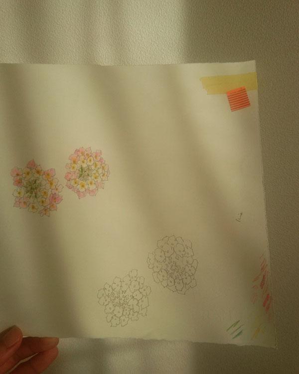 160809_flower