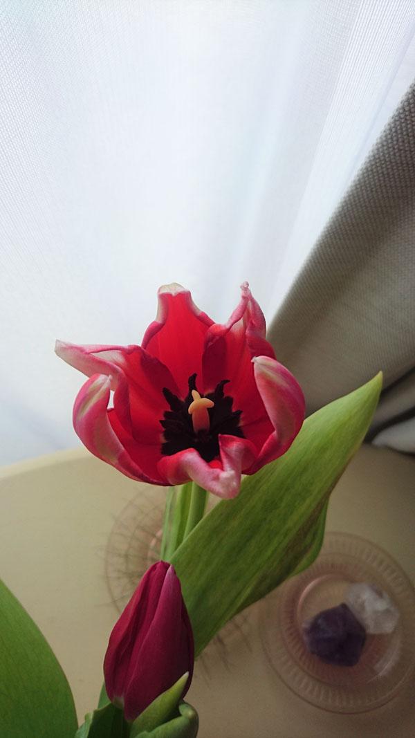 170317_flowers