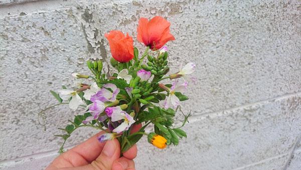170401_flowers